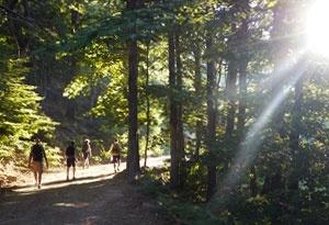 Wanderwege Wald